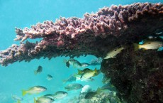 Persian Coral Reef