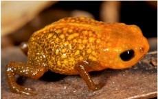 Frog Species