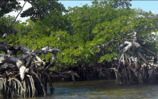 Decline In The Ocean's Marine Biodiversity- Mangroves and Coral Reef In Jeopardy.