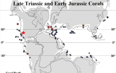 Scientists Examines Late Triassic and Early Jurassic Corals
