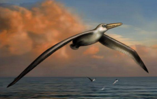 125-Million-Year-Old Bird Wing Helps In Flight Evolution Theory.