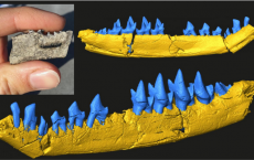 170-Million-Year-Old Mouse-sized Fossil Sheds Light On The Evolution  Teeth