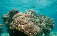 Human Activities Makes Coral Reefs More Vulnerable