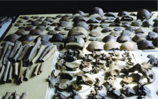Skeletal remains and weapons from Caesar's battle recovered from 55 BC on Dutch territory