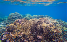 Coral prefer cloudy ocean water