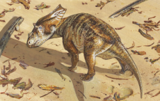 Reconstruction Of Baby Chasmosaurus