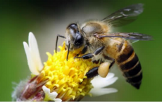 Queen Bees Are Control Freaks