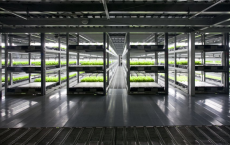 Robot Run Farm To Produce 30,000 Heads Of Lettuce Daily
