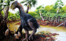 Giant Flightless Bird