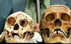 Indonesia's Hobbit-Sized Humans And Modern Human skeleton