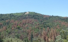 Drought-Induced Forest Dieback