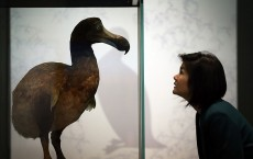 Exhibits In The Natural History Museum's Extinction: Not The End Of The World? Exhibition