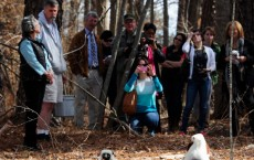 'Island Of Lemurs: Madagascar' Lemur Week Event At The Duke Lemur Center