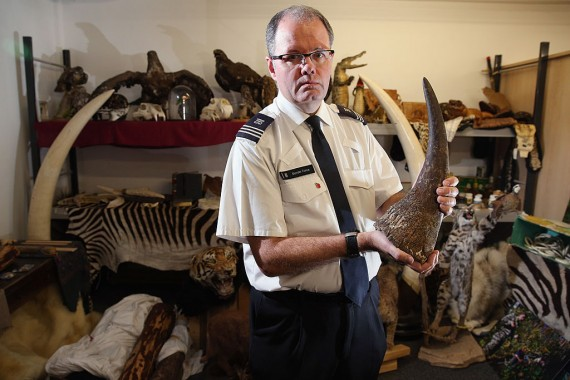 UK Border Force Crack Down On Trade Of Endangered Species