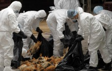 Researchers Discover How Lethal Bird Flu Viruses Evolved And Started Harming Humans