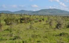 Acacia savanna, Taita Hills Wildlife Sanctuary, Kenya.