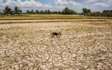 El Nino Dry Spell Plagues Vietnam's Mekong Delta