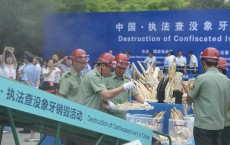 China Destroys Over 662 Kilograms Of Ivory In Beijing