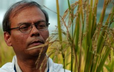 Bio Tech Lab Produces GM Rice In The Philippines