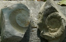 Ammonites Fossil on Stones
