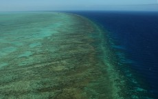 Great Barrier Reef Extinction