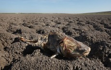 Farmers, Ranchers Struggle As Texas Endures Historic Drought