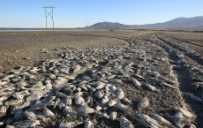Environmentalists Challenge Salton Sea Development Project
