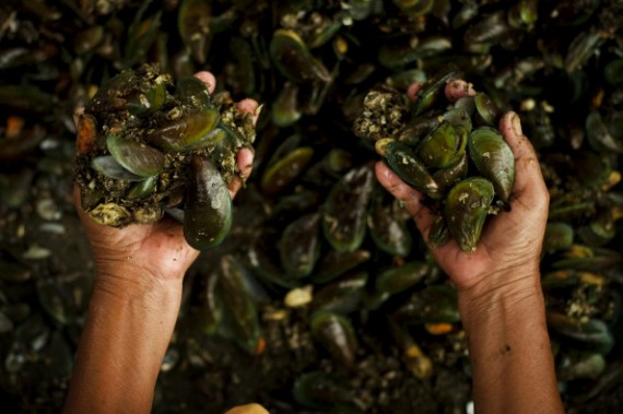 Jakarta's Mussel Farmers Struggle To Cope With Rising Pollution Levels
