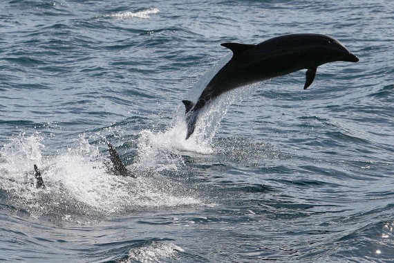 Dolphins, birds' blood samples now contain chemicals that are found in non stick cookware and pesticides.