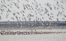 18,000 Species Of Birds
