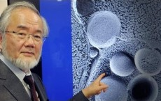 Nobel Prize 2016 Winner In Physiology, Yoshinori Ohsumi