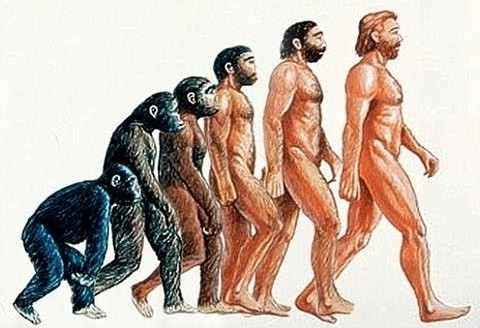Evolution Of Huumans