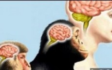 Evolution Of Human Brain