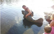 Man Arrested For Harassing a Manatee in Florida