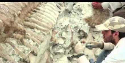 Mexico: The land Of The Dinosaurs, Say Paleontologists