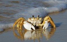 Ship Noise Affects Metabolism of a Crab: Study