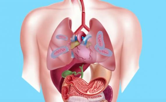 Tuberculosis Diagnosis, Treatments