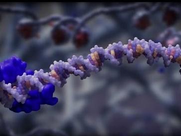 SHERLOCK: A Gene Tool To Detect Zika Virus, Cancer And Antibiotic Resistance Genes