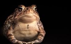 Frog Kissing: The Antidote For Flu Virus?