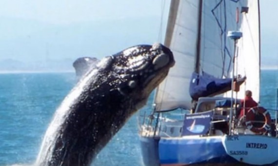 Whale-Boat Collision