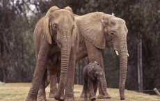 Baby Elephant Joins Herd At Wild Animal Park