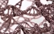 Reversing Aging By Repairing Telomeres In Our DNA
