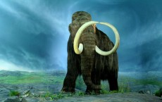 Climate Not to be Blamed For Extinction of Large Mammals