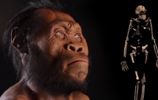 New Human Ancestor Discovered: Homo naledi