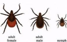 Number Of Lyme Disease Cases Growing