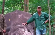 South African Hunter Crushed To Death By Elephant