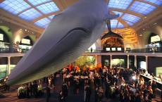 The American Museum Of Natural History's Annual Winter Dance