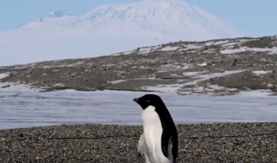 The Latest Threat To Antarctica: An Insect And Plant Invasion