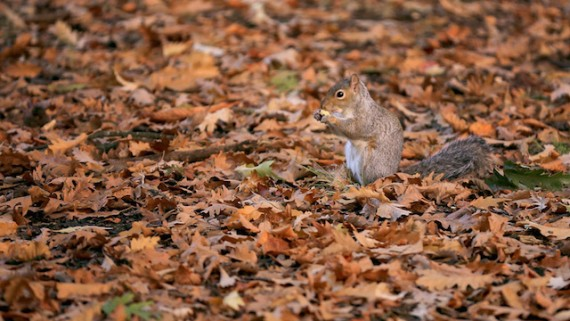 Dead leaves, live squirrel