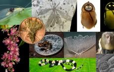 Top Ten Species 2013